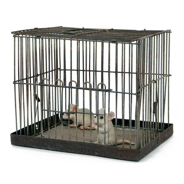 1007 cage souris